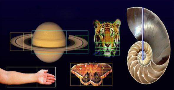 Dãy số Fibonacci và tỷ lệ vàng: Mật mã không thể lý giải của vũ trụ hay chỉ là sự trùng hợp ngẫu nhiên?