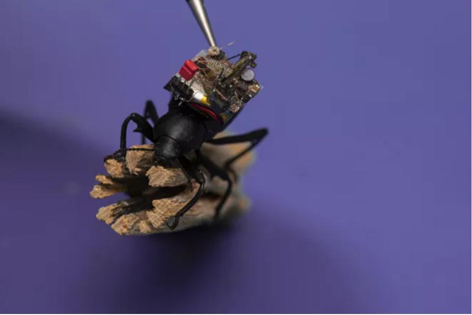 Chế tạo thành công camera 'siêu tý hon', nhỏ đến mức có thể lắp vừa trên lưng một con bọ cánh cứng