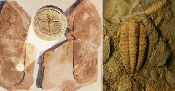 6 dấu tích của 'con người hiện đại' thời viễn cổ có thể đảo lộn quan niệm về lịch sử ngày nay