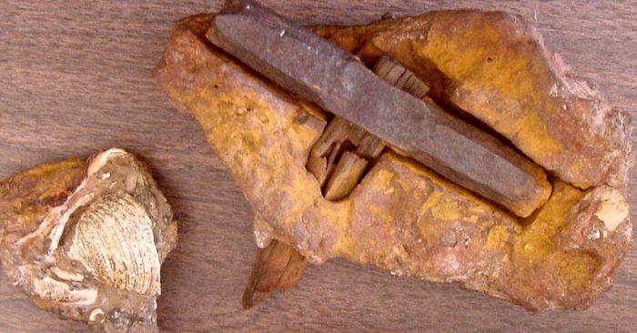 Tạo tác lạc chỗ của thời đại: Chiếc búa có niên đại 100 triệu năm tuổi?